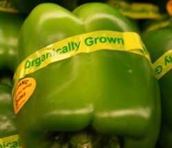 Transición hacia lo orgánico