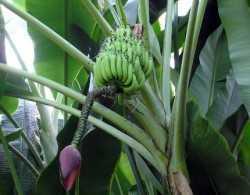 5 nuevos usos para los desechos de frutas
