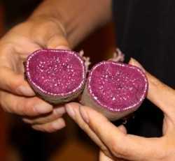Nueva variedad de batata