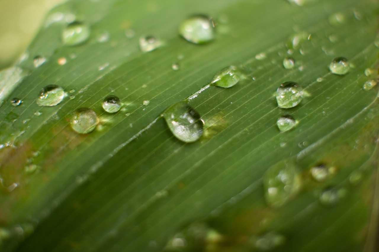 Utiliza el d ficit de presi n del vapor en invernadero for Horticultura definicion
