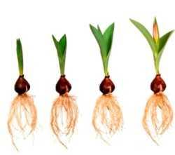 México y una nueva era de fertilizantes