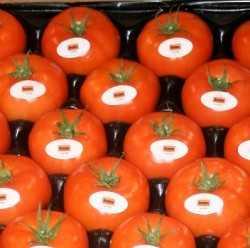 Inocuidad en la producción de tomate fresco