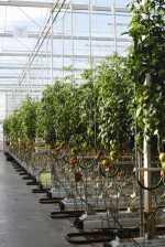 Avances Agrotecnológicos