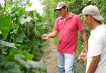 Apoyo a pequeños productores de vegetales orientales