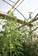 Parámetros para la localización y construcción de un invernadero