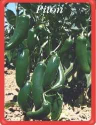 US Agriseeds, amplia selección de variedades exportables