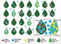 Control con plantas trampa y reservorio