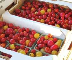 mixed grape tomatoes auction 2010