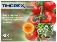 Timorex Gold
