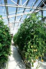 Métodos para reciclar agua en tu invernadero