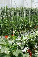 Dióxido de carbono como fertilizante