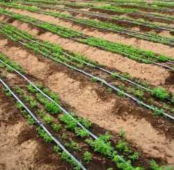 Resultado de imagen para practicas de cultivos agricolas+hortícolas