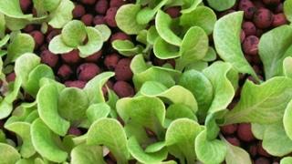 Composta hortalizas for Horticultura definicion