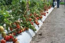 Equilibra tu suelo para cultivos de calidad