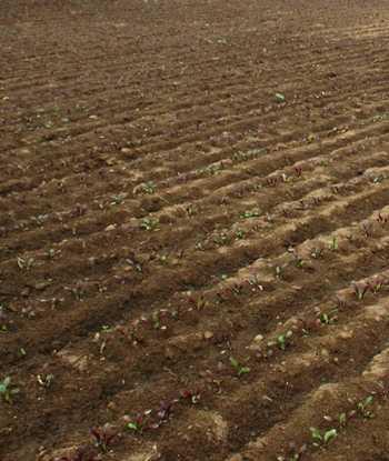 Factores en la degradaci n del suelo hortalizas for Caracteristicas de los suelos