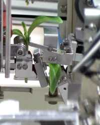 grafting_robot