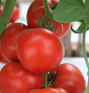Producci n de tomates en invernadero en m xico hortalizas for Que es una mesa de cultivo