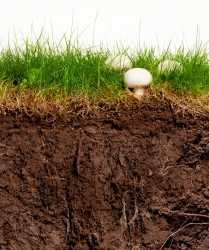soil_phases_istock