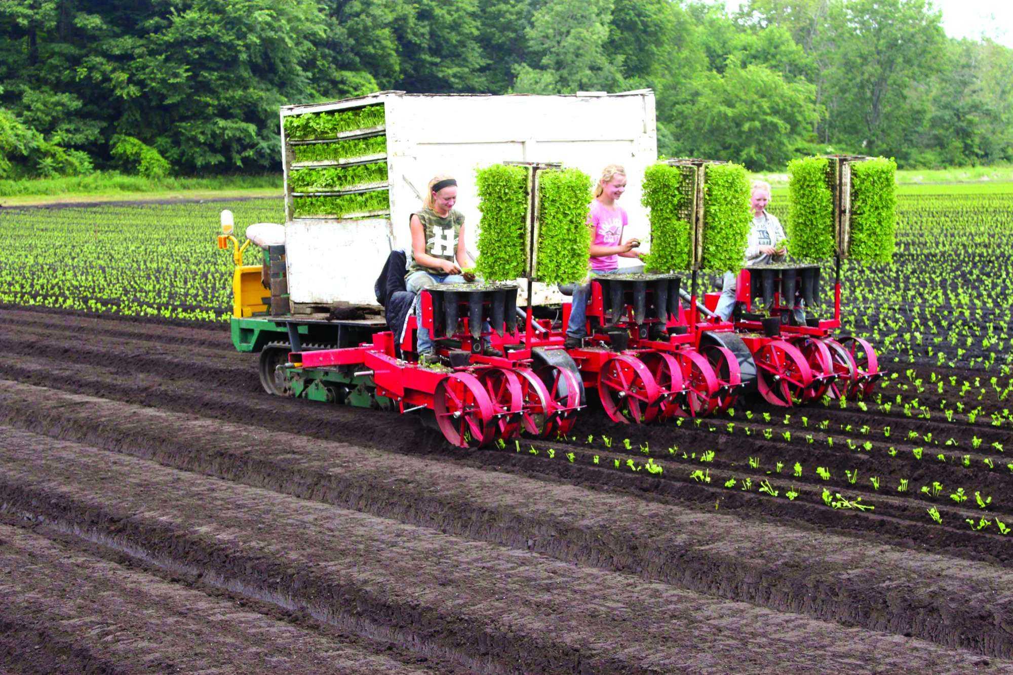 Nuevas opciones de sembradoras a la medida | Hortalizas