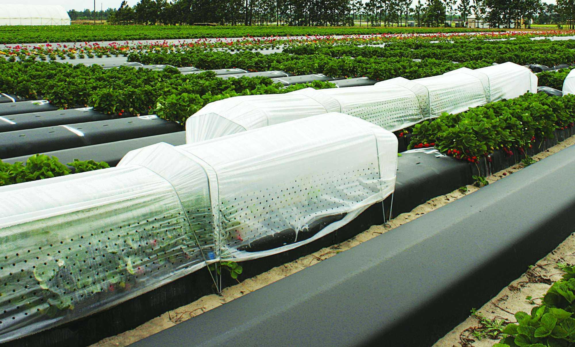 Clasificaci n de estructuras para la agricultura protegida for Estructuras para viveros plantas
