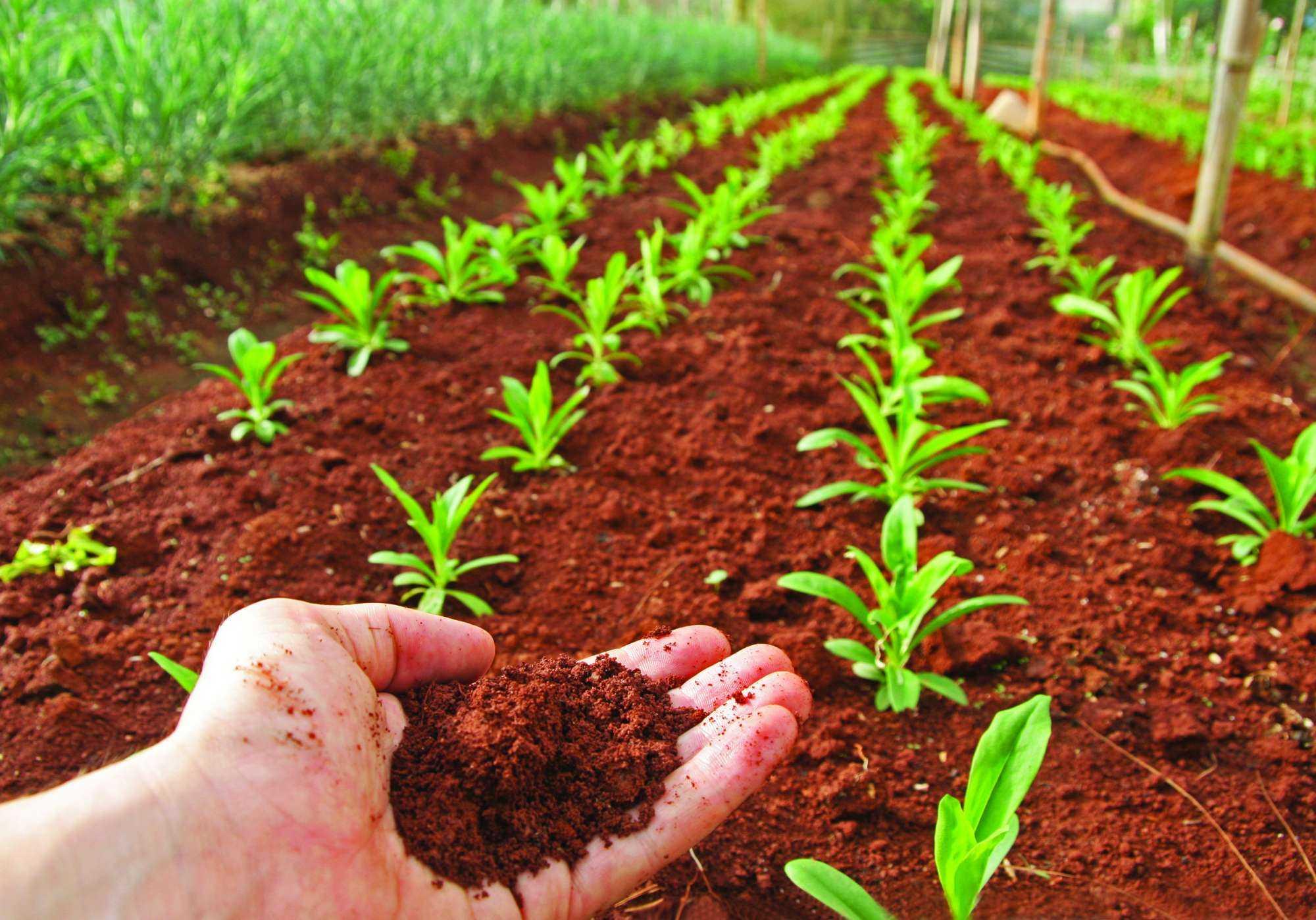 Diagnostique su suelo antes de producir hortalizas for Suelos para jardines fotos