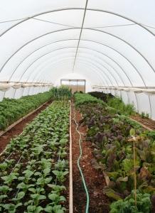 El manejo preciso del fertilizante puede elevar su eficiencia de un 10 hasta un 30 por ciento y por lo tanto debe incluirse como parte de todos los sistemas de producción que busquen la sustentabilidad, incluso los que no hagan énfasis en SINV.