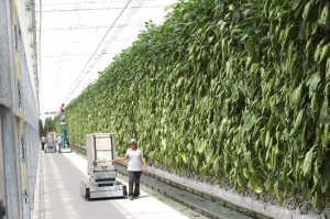 Agropark 09 052