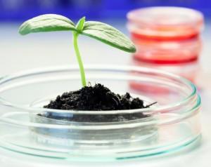 Seedling science istockphoto