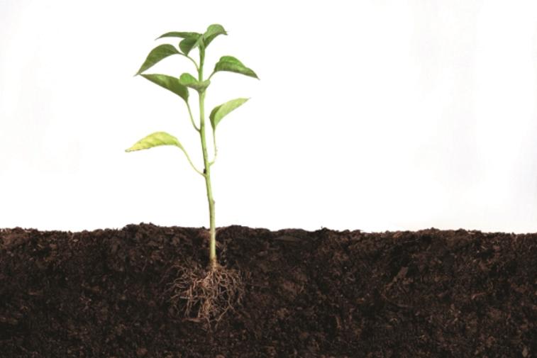 plantilla con raiz