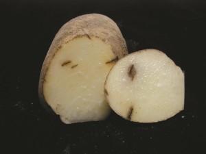 potato bruise figure 1