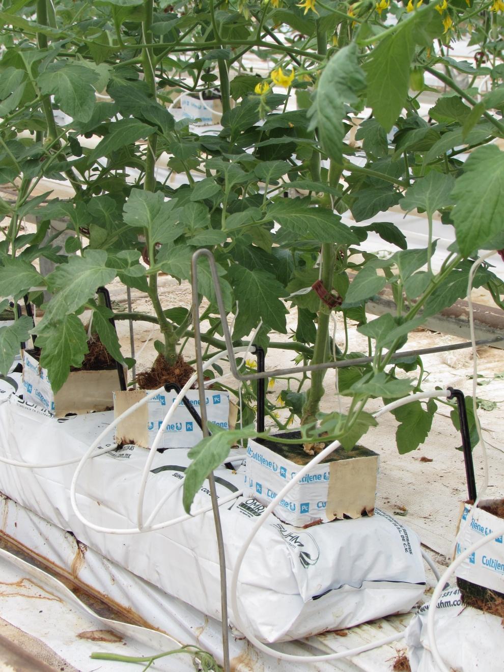 Prepara el suelo para la producci n de tomate hortalizas - Cojines gigantes para el suelo ...