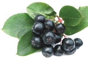 aronia variedad de berries