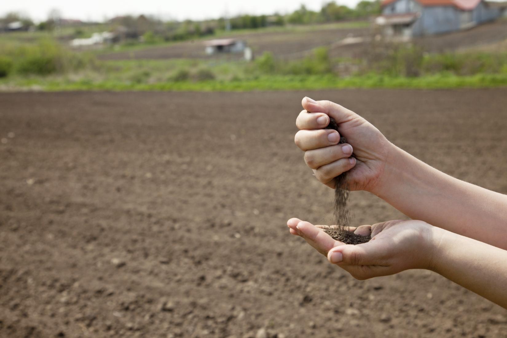 Manejo de la sustentabilidad del suelo hortalizas part 3 for Suelo besar el suelo xd