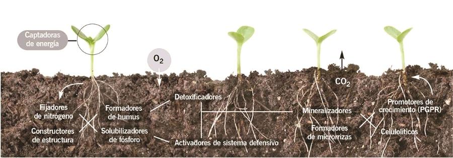 biorremediacion del suelo