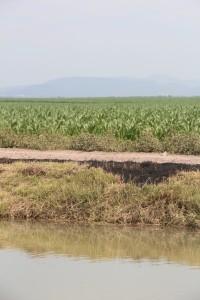 paisaje culiacan