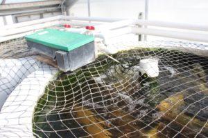 La producci n acuap nica rinde resultados ideales de alta for Tanques para peces