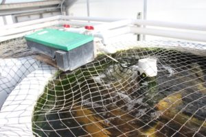 tanque de peces acuaponia