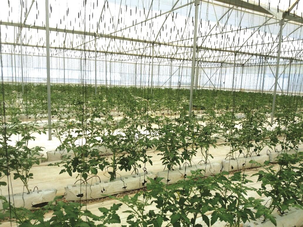 Asociaci n estrat gica apoya la industria potosina de for Asociacion de hortalizas