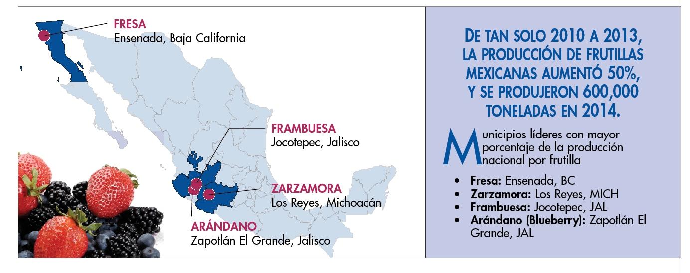 municipios-lideres-en-produccion-de-frutillas