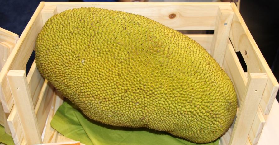 jackfruit-vitrina