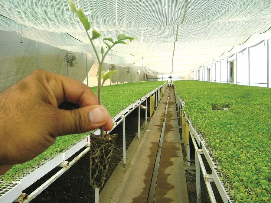 plantulas-en-camara-de-germinacion