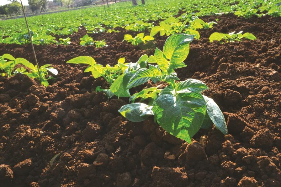 Los cultivos de cobertura son esenciales para mantener al for Que son cultivos asociados