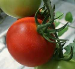Mejora la nutrición de tus tomates