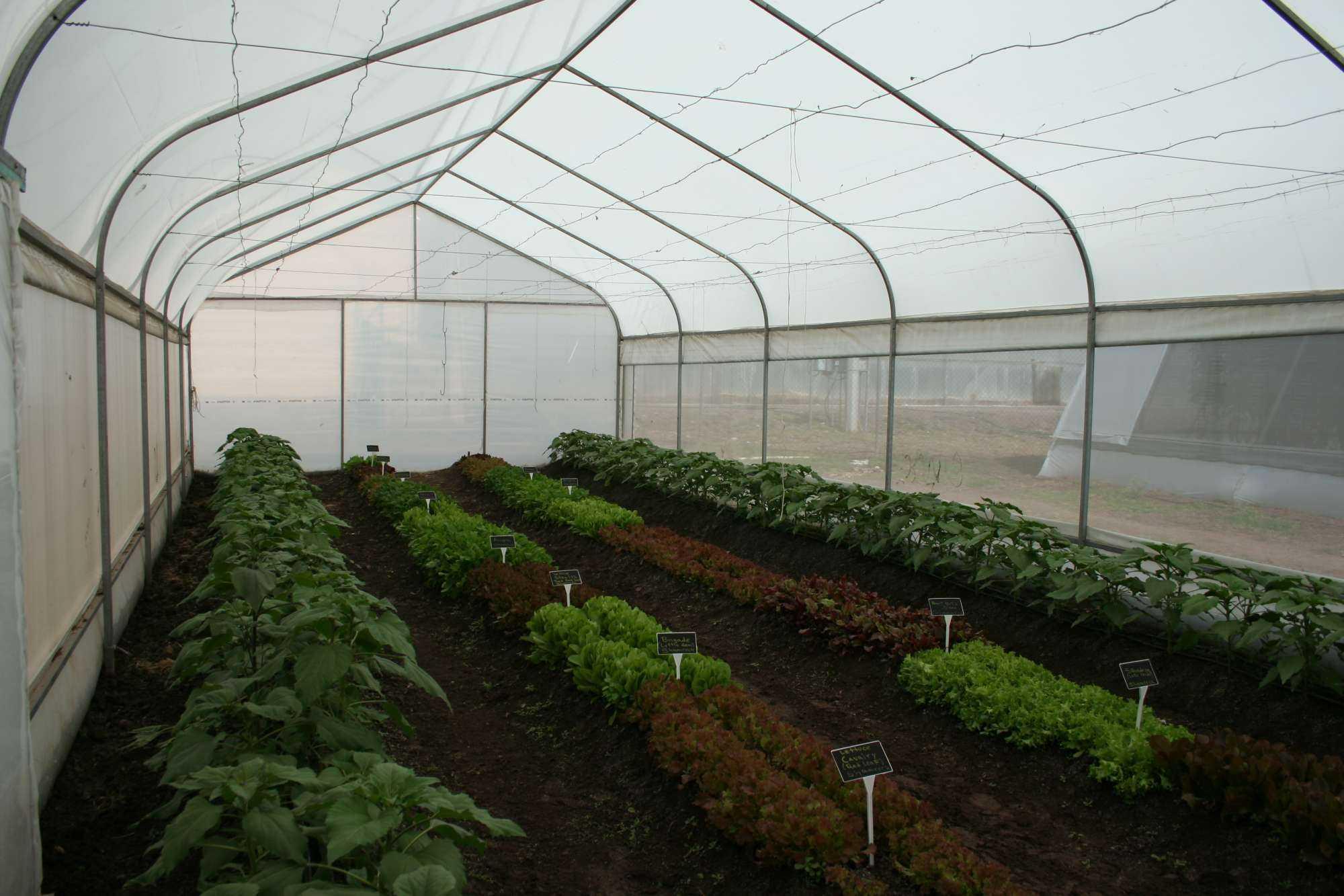Selecciona la cubierta adecuada para tu invernadero for Vivero estructura