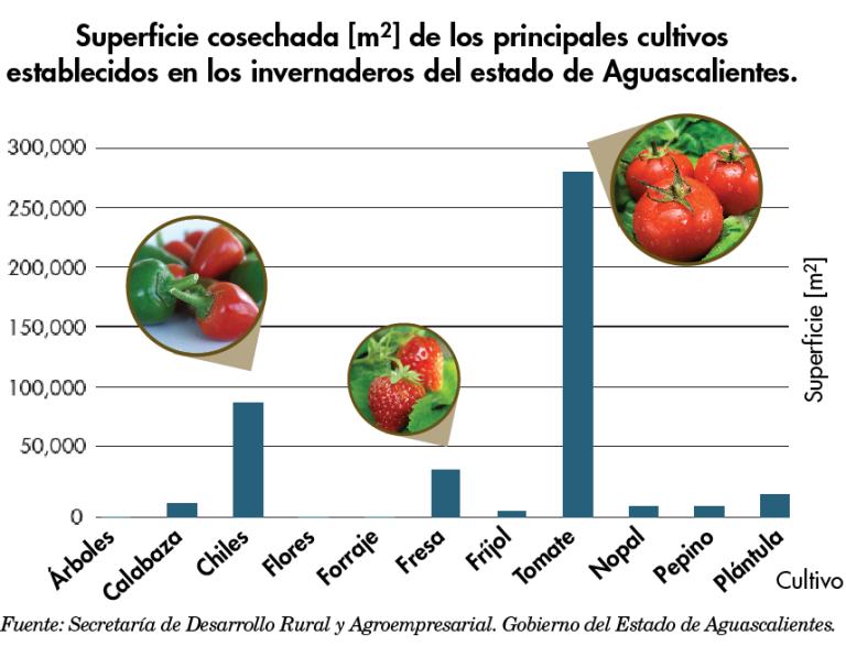 Capacitaci n e integraci n esenciales para desarrollo y for Que son cultivos asociados